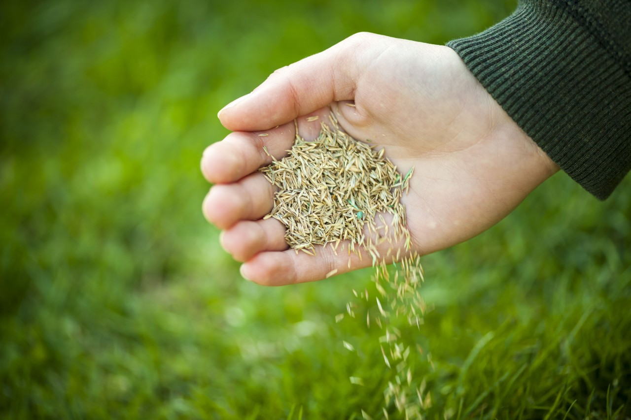Overseeding Your Lawn the Right Way
