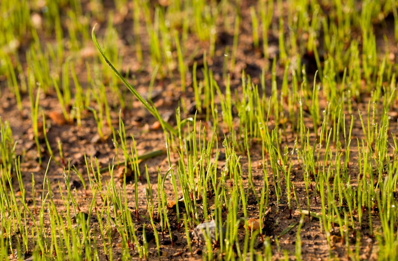 When Should You Plant Grass Seed in the Fall?