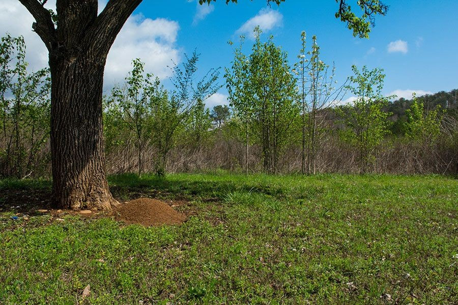 How to Get Rid of Ant Hills in Your Lawn