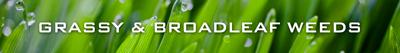 Grassy & Broadleaf Weeds